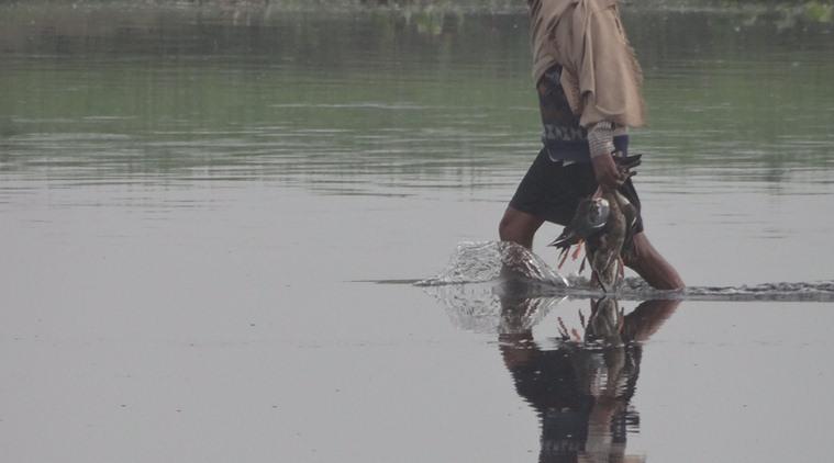 Rampant poaching at Nal Sarovar, no step taken to protect wetlands